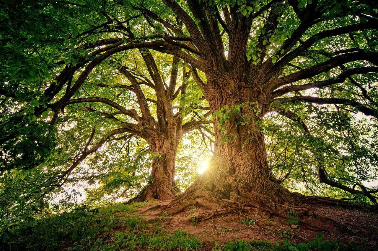offrez un arbre