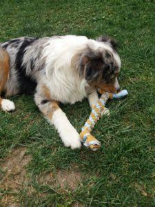 fabriquer un jouet pour chien
